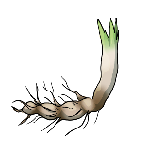 Cattail Root by ReapersSpeciesHub