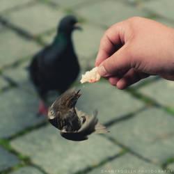 One Little Bird by DannyRoozen