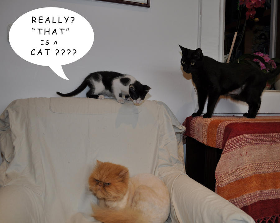 educated cat - photo #26