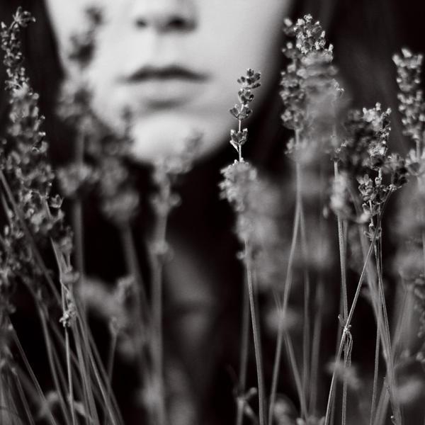 lavande. by moumine