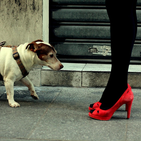 chaussures chien. by moumine