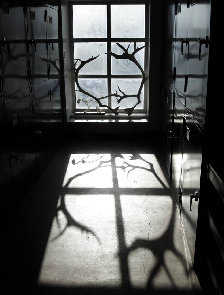 Reflected Shadows