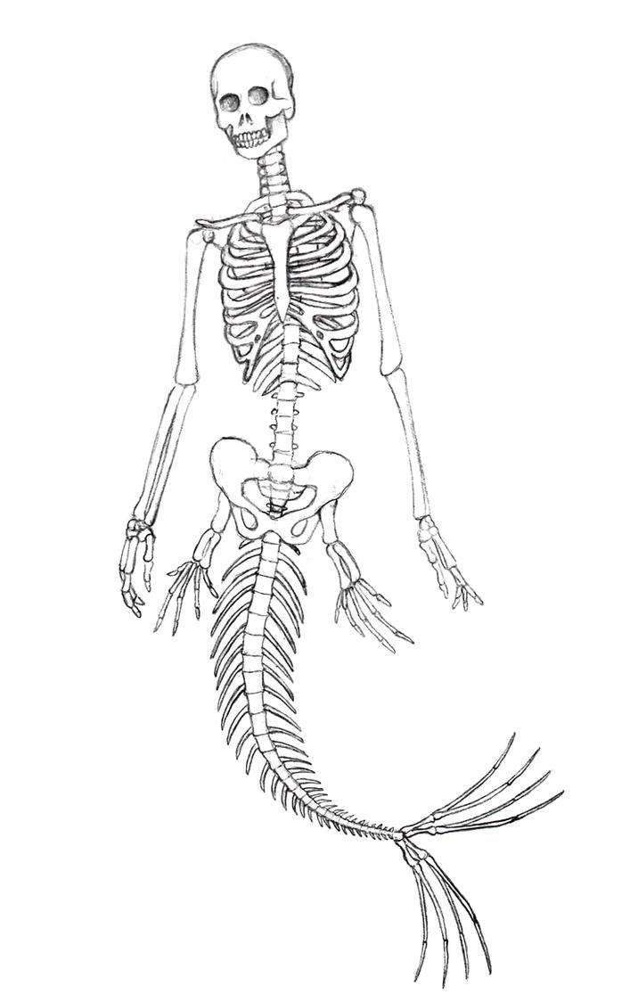 Mermaid Skeleton by pyromobile