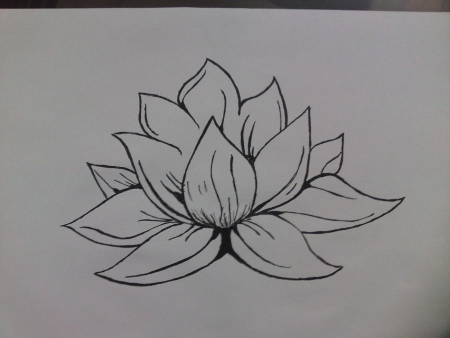 Loto flower by 6AbYdlc on DeviantArt