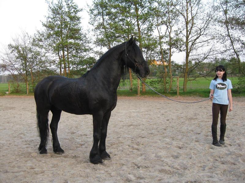 Horse stock - 84 by SmileTheWholeDay