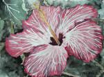 Hibiscus flower tropical art