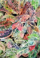 Croton tropical plant leaves by derekmccrea
