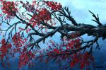 Japanese cherry blossom art by derekmccrea