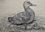Duck and the ducklings - pen art by Sangeeta1995