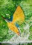 Kingfisher water splash