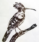 Bird in Ink