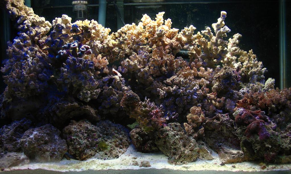 Fiji Live Rock Totoka Live Rock Proto Reef by