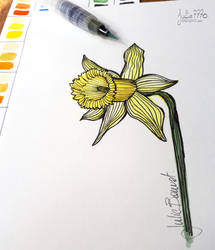 [Watercolor flowers] Daffodil by Julie7770