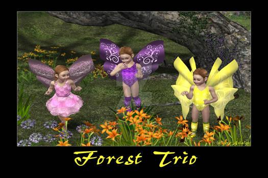Forest Trio