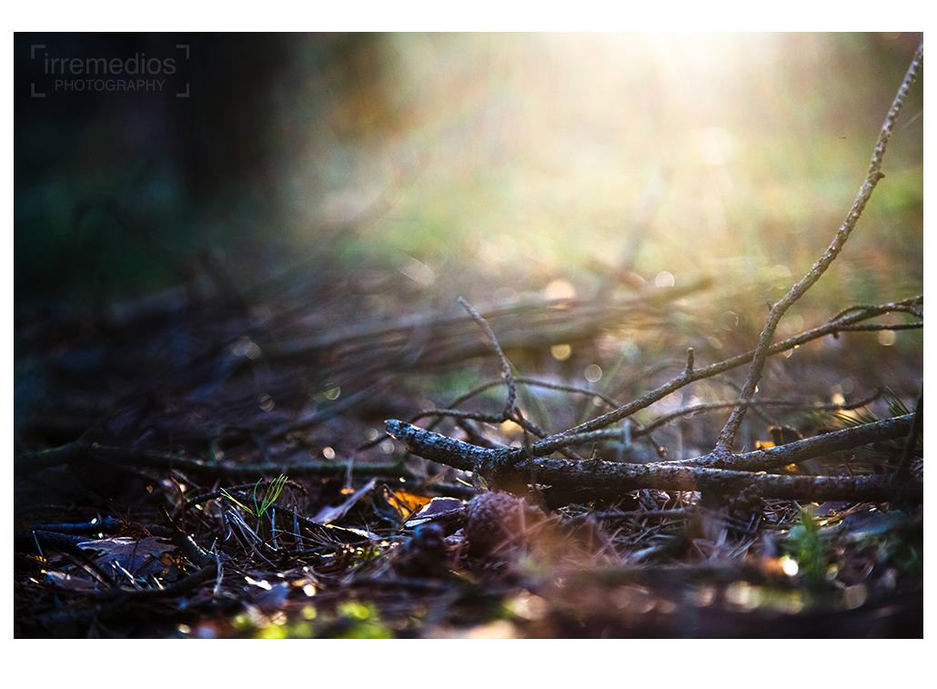 A forest II by irremedios