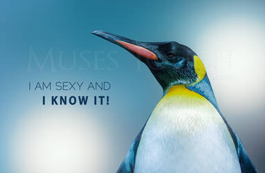 I am sexy and I know it!