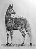 Okapi by IrinaAsphodel