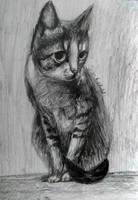 My cat by IrinaAsphodel