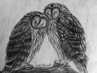 Owls by IrinaAsphodel