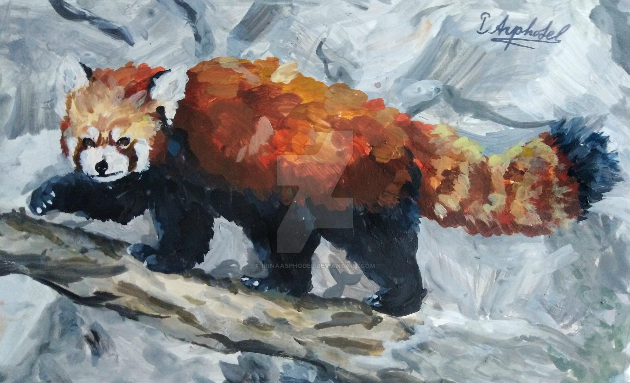 Red panda study by IrinaAsphodel