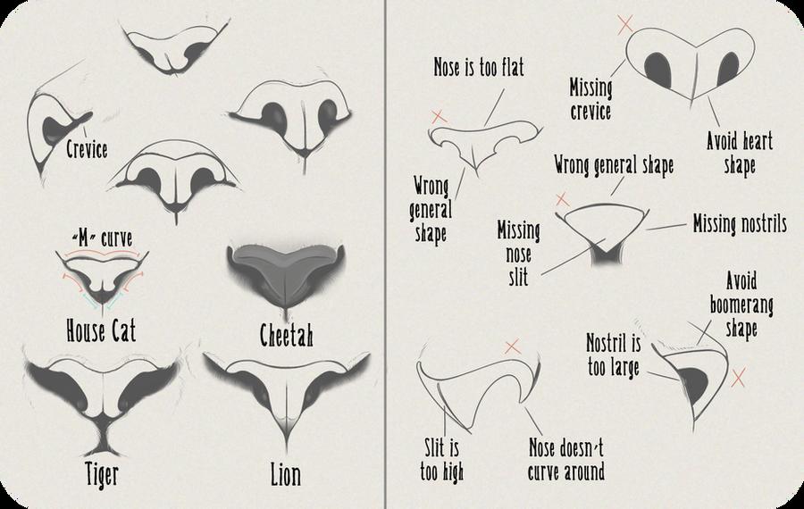 Cat nose anatomy