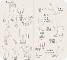 Realistic Domesticated Feline Front Leg Tutorial