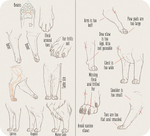 Realistic Domesticated Feline Front Leg Tutorial by AntiDarkHeart