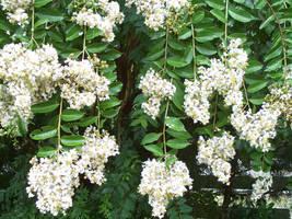 White waterfall of flowers by caspercrafts