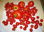 Tomato harvest - tomatoes on a napkin