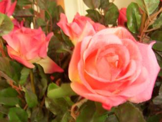 Three Pink Roses by caspercrafts