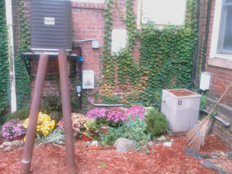 Urban garden in alley behind osakas northampton ma by caspercrafts