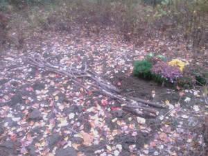 Guerrilla garden with walkway made of sticks