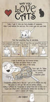 Why You Love Cats