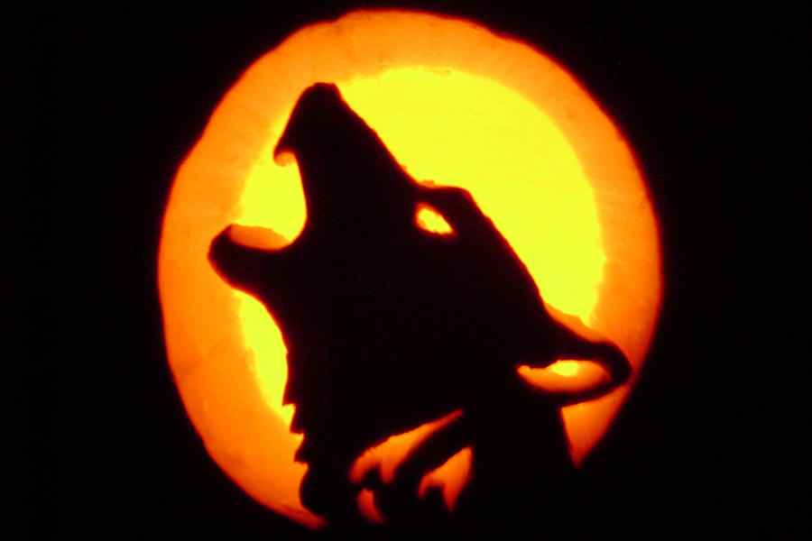 Wolf pumpkin carving by storms shadow on deviantart