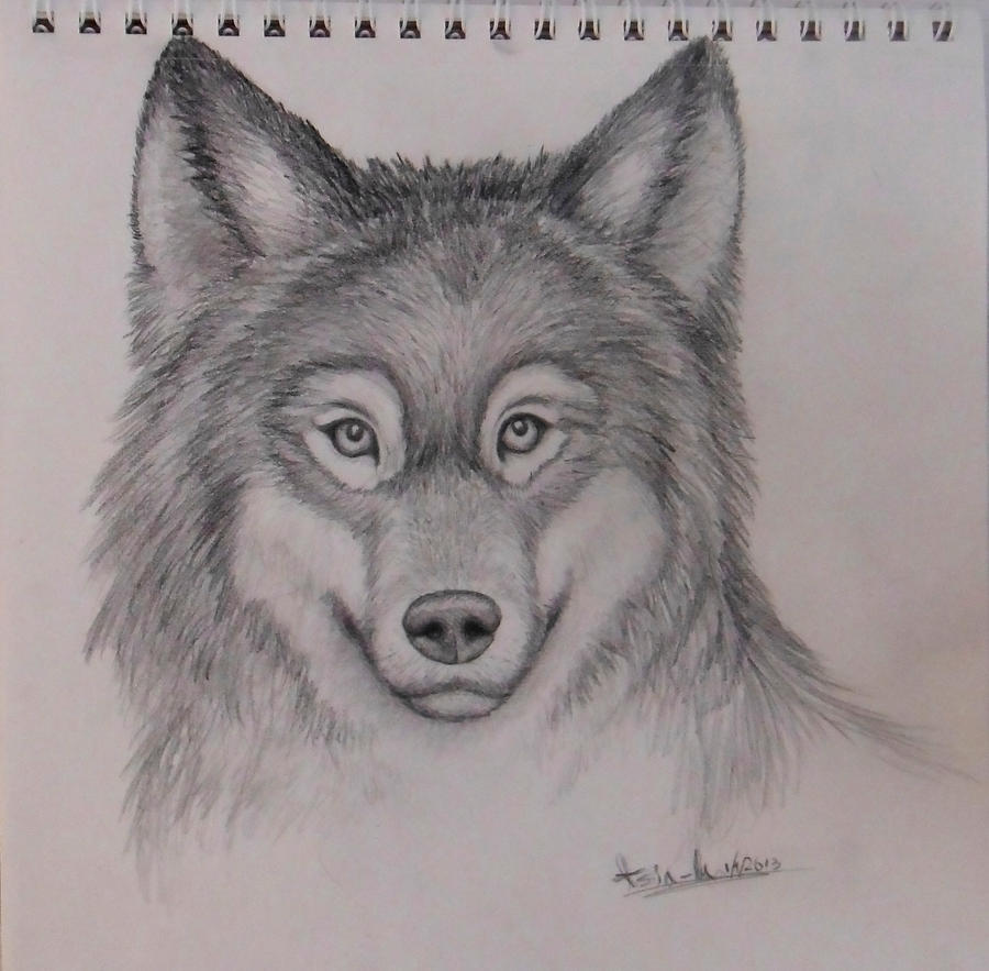 Drawings Of Wolves: Realistic Wolf Drawing-Mark Crilley Tutorial By Yourtoast