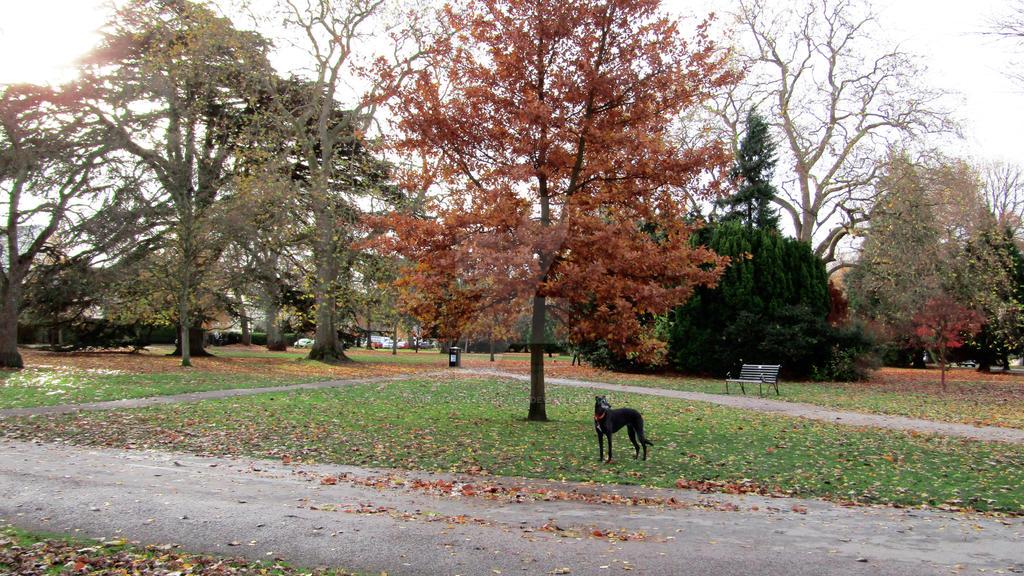 Pittville Park, Cheltenham by Virtual-Waster-Art