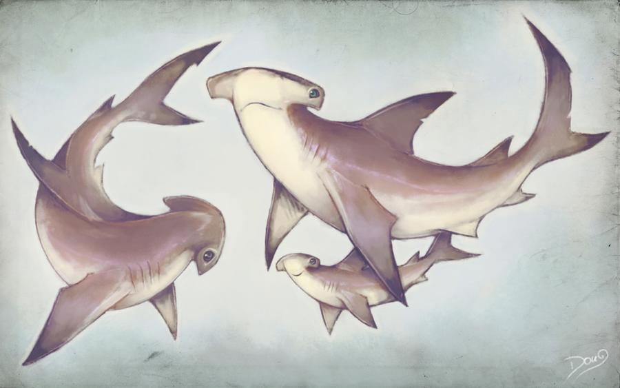 whitetip shark attack