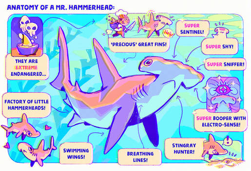 Anatomy of a Mr. Hammerhead