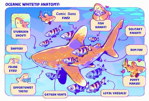 Oceanic Whitetip Anatomy