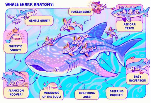 Shark Whale Anatomy