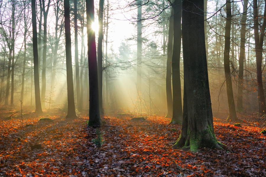 Sunbeams by Peenbuiker