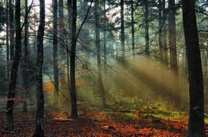 Sunbeams in the wood by Peenbuiker