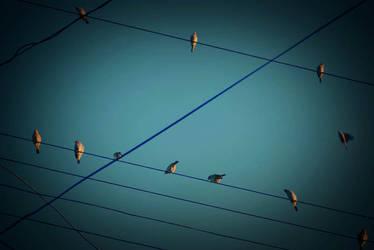 les oiseaux by marievonb