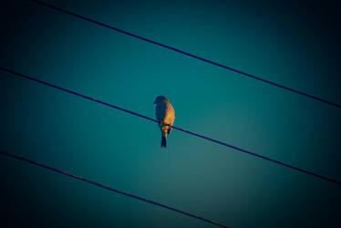 l'oiseau by marievonb