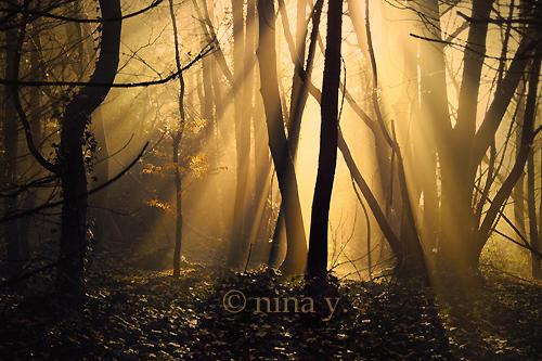Golden by nina-Y