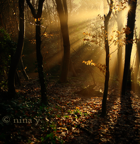 Golden II by *nina-Y