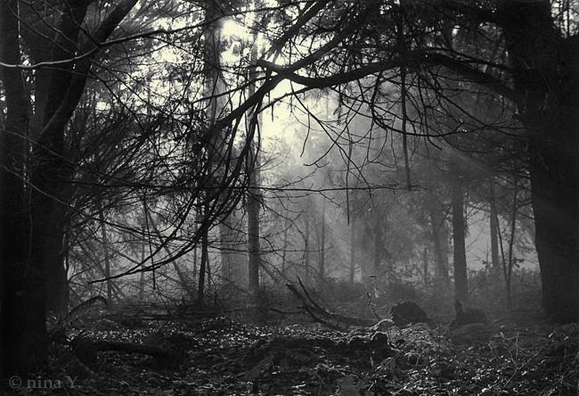 Dark Forest BW by nina-Y