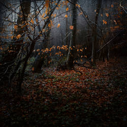 Melancholia Woods by nina-Y