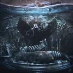 The Aquarium of Wonder