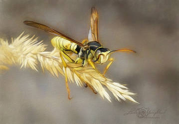 Wasp out on a limb by Myriadelle